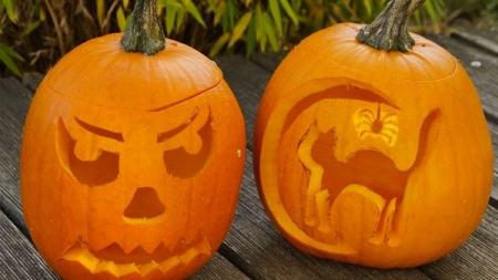 Halloween e os nossos animais de estimação