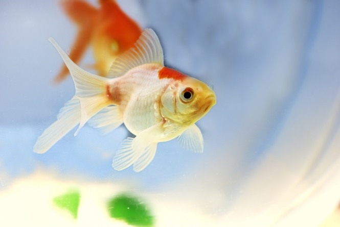 Sintomas de doença nos peixes