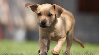10 conselhos práticos para os novos proprietários de um cão