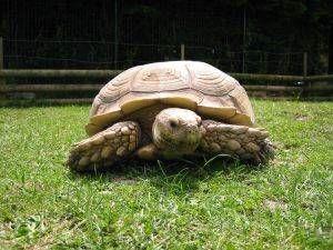 Cuidados gerais de tartarugas terrestres