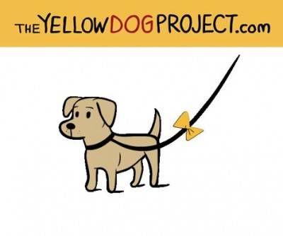 Conheces o Projeto Laço Amarelo?