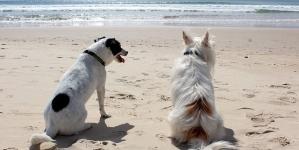 Adotar outro cão em casa, quando é conveniente?