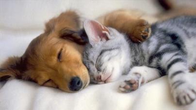 Alimentação de um cão ou gato filhote