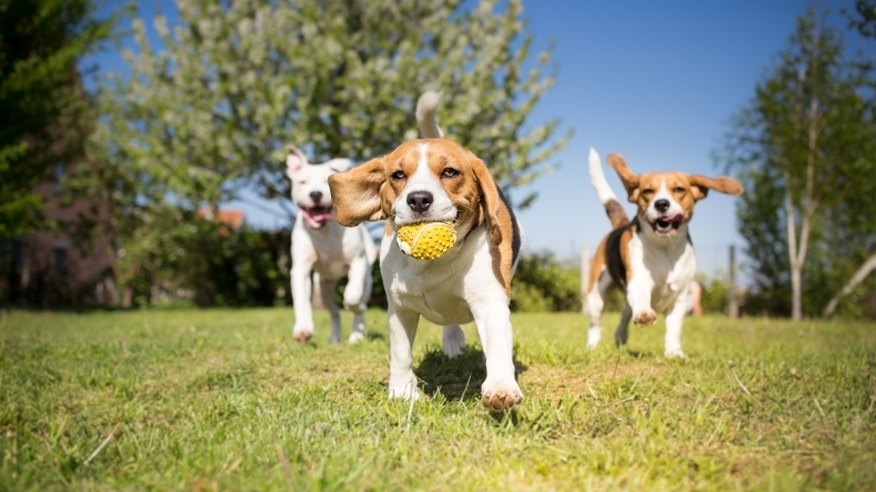 Artrose em cães