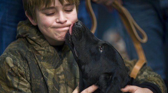 Como construir um bom vínculo com o teu cão