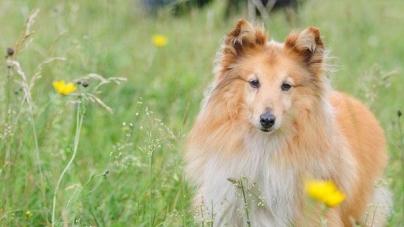Como ensinar um cão: transmite-lhe paciência e serenidade – Parte I