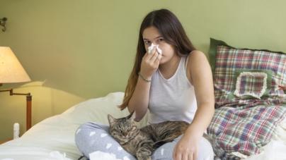 Alergia aos gatos