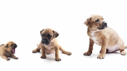 Etapas do crescimento do cão