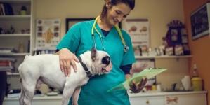 Hemograma em cães