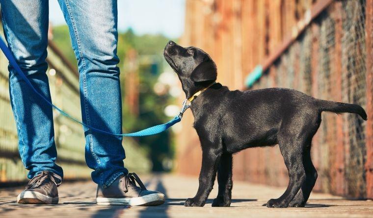 Como educar um cachorro desde o primeiro dia