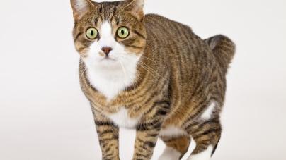 Mitos sobre os gatos