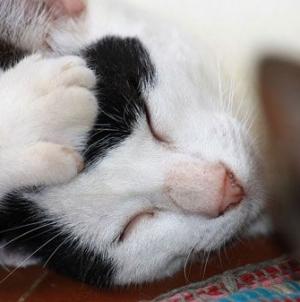 Infecção de urina em gatos e outras doenças urinárias