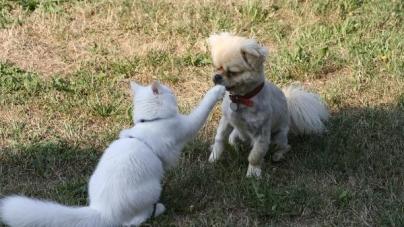 Alimentação dos animais de estimação com insuficiência renal crônica