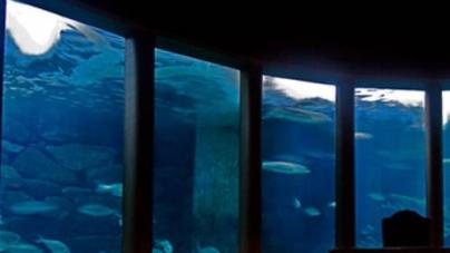 Análise da água nos aquários