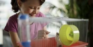 Como cuidar de um hamster?