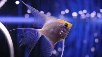 Quantas vezes ao dia devo alimentar os meus peixes?