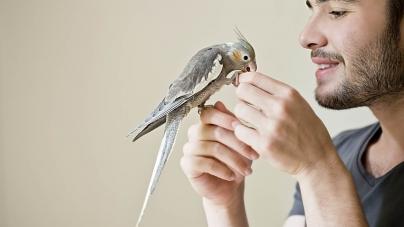 Sintomas de doença nas aves domésticas