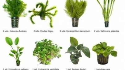 Como instalar plantas naturais dentro do meu aquário
