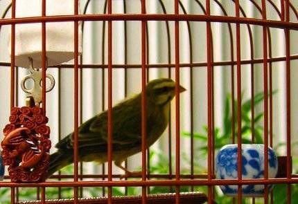 Uma gaiola limpa é crucial para um pássaro saudável