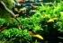 O que é preciso para fornecer CO2 ao aquário?