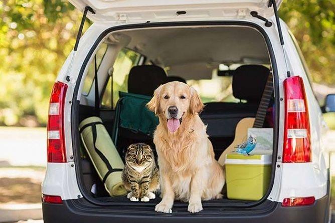 Viajar com animais de estimação: como deslocar-se de carro de forma segura