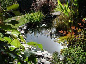 Um remanso de qualidade de vida para homem e animal: O estanque de jardim próprio