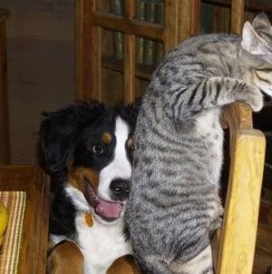Jogos didáticos para animais de estimação