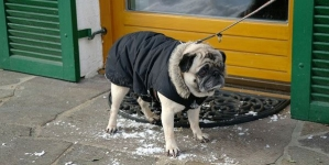 Os cães devem usar roupa ou não?