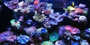 É preocupante que os meus peixes estejam sempre na superfície?