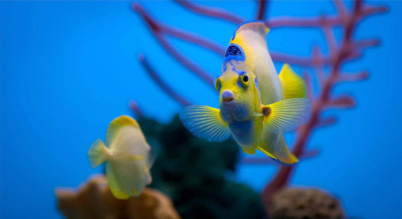 beneficios-da-aquariofilia