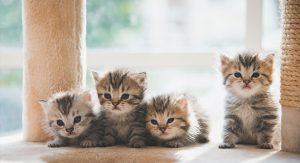 gatos-pequenos-cuidar-gatinho