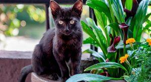 melhores-antiparasitarios-gato-bombay