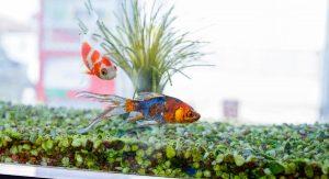 peixes-de-agua-fria