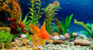 peixes-para-principiantes