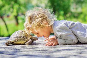 carateristicas-das-tartaruga