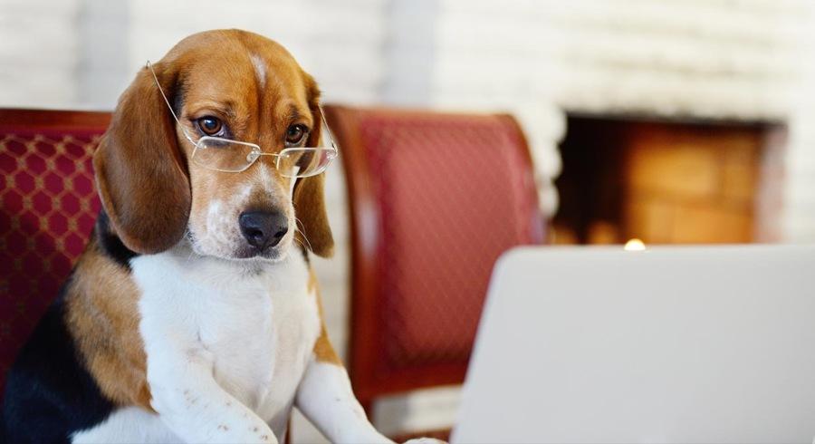 cuidar-filhote-beagle