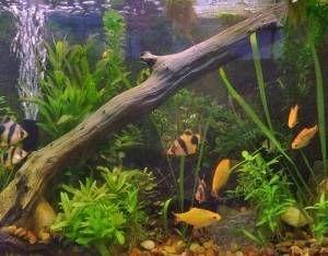Ciclo de nitrogénio nos aquários novos