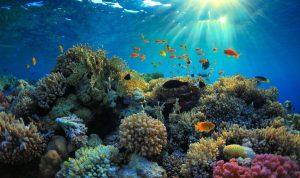 Os peixes mais raros do mundo