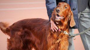 As pessoas com imunodeficiência podem ter animais de estimação