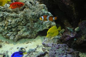 Como planear um aquário de água salgada