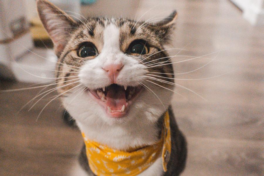 Como ter gatos mais felizes
