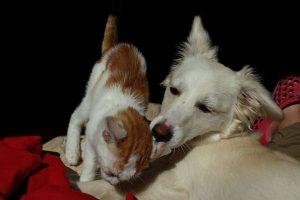 Cuidado com os ouvidos nos cães e gatos
