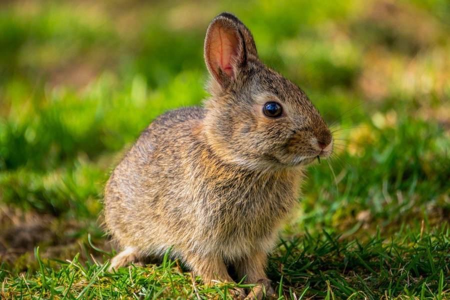 Os coelhos e o verão. Como protegê-los do calor