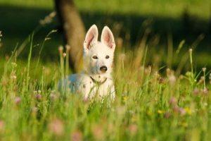 Os melhores desparasitantes para cachorros