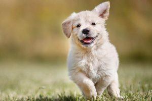 Os melhores produtos para o teu cachorro