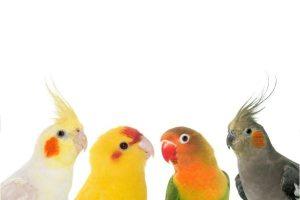 As aves são dinossauros