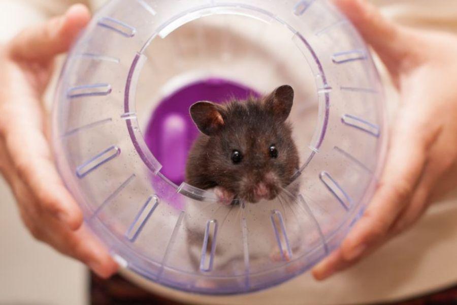 Brinquedos para hamster