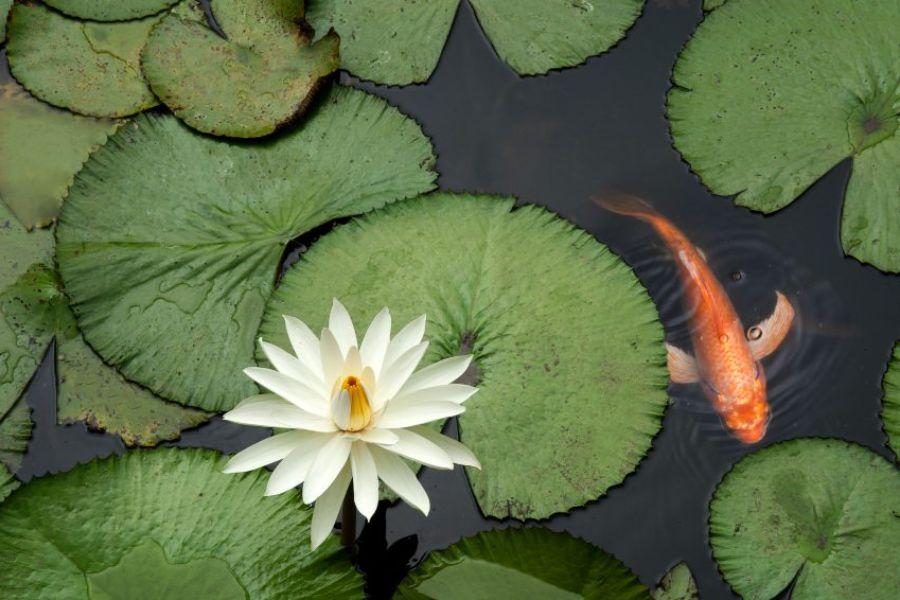 Conselhos para cuidar o teu lago de jardim com regularidade