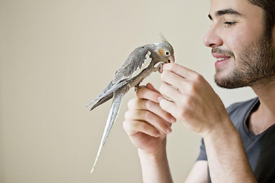 Quais são as doenças dos pássaros_