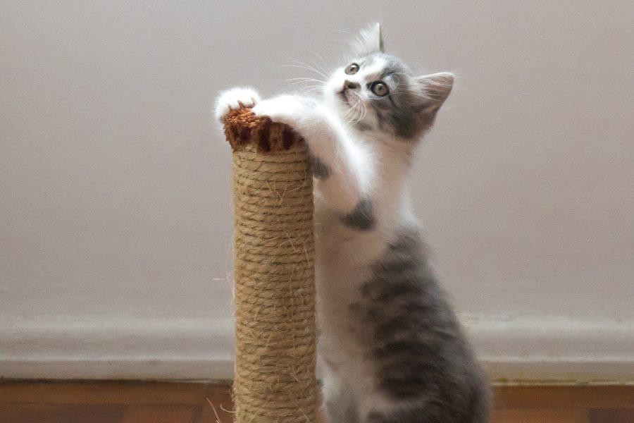 Como ensinar ao meu gato a usar o arranhador